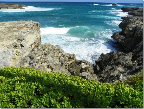 Oahu Hawaii 2011 215