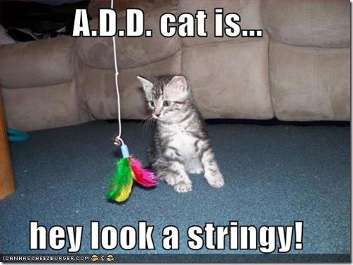 ADD Cat