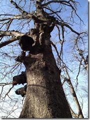 RCP hike. Tree